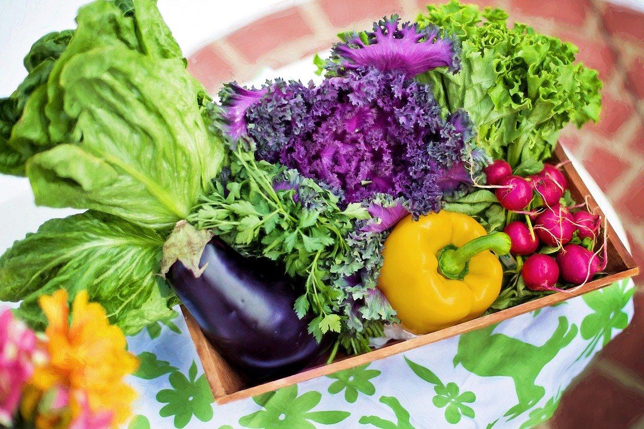 vegetables, garden, harvest